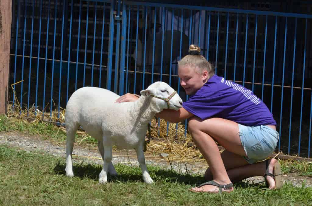Sheep –Lebanon Country Fair