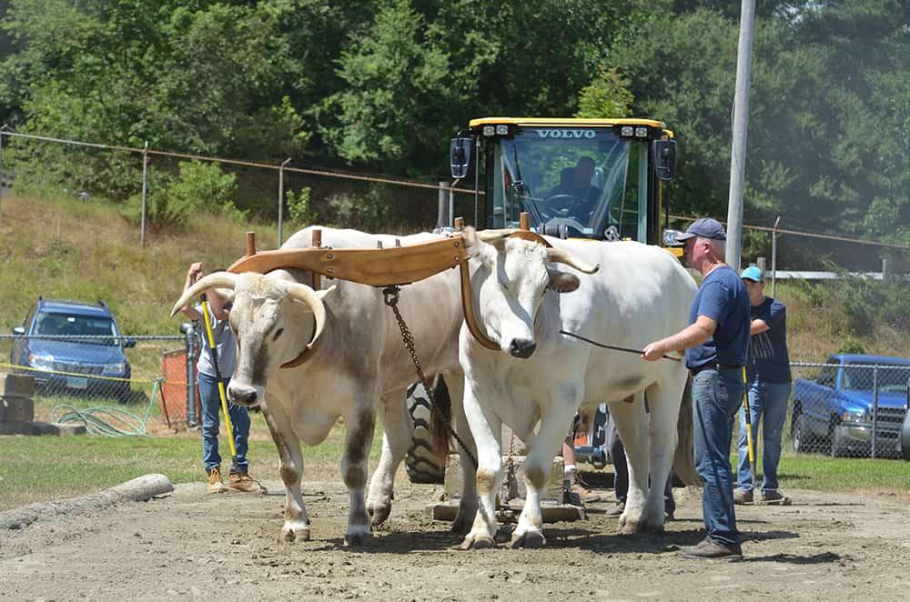 Animal Pulls at the Lebanon Country Fair